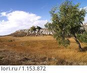 Береза на фоне холма. Стоковое фото, фотограф Виктор Шмыголь / Фотобанк Лори