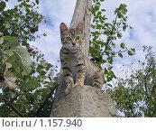 Купить «Молодая пестрая кошка на столбе», фото № 1157940, снято 6 сентября 2009 г. (c) Минакова Татьяна / Фотобанк Лори