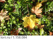 Купить «Осенний фон», фото № 1158084, снято 30 сентября 2009 г. (c) Наталья Белотелова / Фотобанк Лори