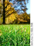 Зелёная трава на фоне осеннего леса. Стоковое фото, фотограф Сергей Плахотин / Фотобанк Лори