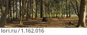Купить «Панорама ботанического сада в Москве», фото № 1162016, снято 18 октября 2008 г. (c) Василий Аксюченко / Фотобанк Лори