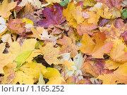 Купить «Фон. Опавшая желтая листва», фото № 1165252, снято 28 октября 2007 г. (c) Илюхина Наталья / Фотобанк Лори