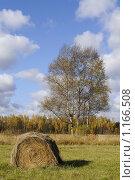 Осень. Стоковое фото, фотограф Екатерина Стрельникова / Фотобанк Лори