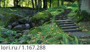 В старом парке Кадриорг, Таллин, Эстония. Стоковое фото, фотограф Александр Виноградов / Фотобанк Лори