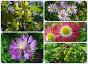 Летние растения и ягоды, эксклюзивное фото № 1169208, снято 26 июня 2008 г. (c) lana1501 / Фотобанк Лори