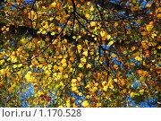 Купить «Осенний лес», эксклюзивное фото № 1170528, снято 7 октября 2009 г. (c) lana1501 / Фотобанк Лори