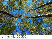 Купить «Осенний лес», эксклюзивное фото № 1170536, снято 7 октября 2009 г. (c) lana1501 / Фотобанк Лори