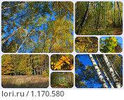 Купить «Осенний лес», эксклюзивное фото № 1170580, снято 7 октября 2009 г. (c) lana1501 / Фотобанк Лори