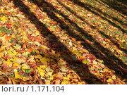 Купить «Осень», фото № 1171104, снято 15 октября 2009 г. (c) Наталья Белотелова / Фотобанк Лори