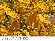 Купить «Осень», фото № 1171152, снято 15 октября 2009 г. (c) Наталья Белотелова / Фотобанк Лори