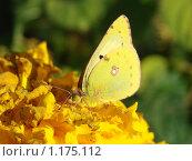 Бабочка. Стоковое фото, фотограф Геннадий Кефели / Фотобанк Лори