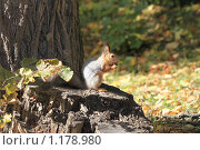 Купить «Белка на пенечке», фото № 1178980, снято 3 октября 2009 г. (c) Яременко Екатерина / Фотобанк Лори