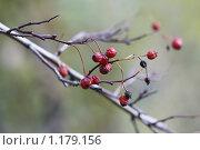 Купить «Осеннее настроение», фото № 1179156, снято 10 октября 2009 г. (c) Яременко Екатерина / Фотобанк Лори