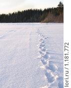 Купить «Следы на снегу в сторону леса», фото № 1181772, снято 2 января 2009 г. (c) Кекяляйнен Андрей / Фотобанк Лори