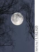 Полная луна. Стоковое фото, фотограф Андрей Сучков / Фотобанк Лори