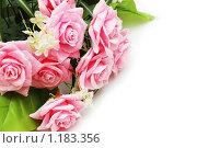 Купить «Розовые розы с каплями воды», фото № 1183356, снято 31 декабря 2006 г. (c) Elnur / Фотобанк Лори