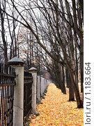 Осень. Стоковое фото, фотограф Наталья Хваткова / Фотобанк Лори