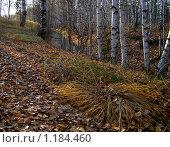 Осень. Стоковое фото, фотограф Евгений Селезнев / Фотобанк Лори