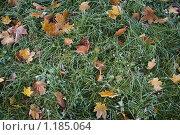 Осень. Стоковое фото, фотограф Лукьянов Илья / Фотобанк Лори