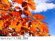 Осень. Стоковое фото, фотограф Левончук Юрий / Фотобанк Лори
