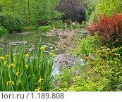 Пруд в саду Клода Моне (2009 год). Стоковое фото, фотограф Aleksey Trefilov / Фотобанк Лори