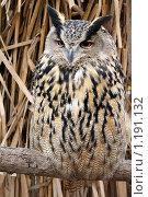 Купить «Филин. owl», фото № 1191132, снято 8 июля 2020 г. (c) Сергей Павлов / Фотобанк Лори