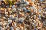 Морские ракушки, фото № 1193892, снято 13 августа 2004 г. (c) Кравецкий Геннадий / Фотобанк Лори