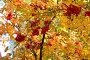 Втеки рябины, фото № 1194332, снято 9 октября 2005 г. (c) Бабенко Денис Юрьевич / Фотобанк Лори