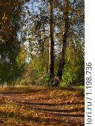 Купить «Велосипед в лесу», фото № 1198736, снято 21 октября 2009 г. (c) Сергей Костюров / Фотобанк Лори