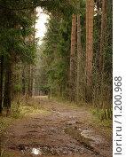 Купить «В парке», фото № 1200968, снято 1 декабря 2008 г. (c) Молодкин Михаил Владимирович / Фотобанк Лори
