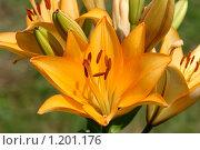Распустившийся цветок. Стоковое фото, фотограф Никита Савин / Фотобанк Лори