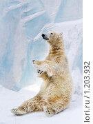 Купить «Белый медведь в зоопарке», фото № 1203932, снято 7 февраля 2009 г. (c) Петр Кириллов / Фотобанк Лори