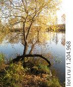 Купить «Дерево на берегу реки», фото № 1204968, снято 18 октября 2009 г. (c) Виктор Юрасов / Фотобанк Лори