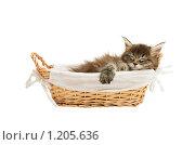 Купить «Котенок», фото № 1205636, снято 8 ноября 2009 г. (c) Бутинова Елена / Фотобанк Лори