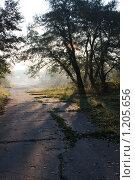 Солнечная дорога. Стоковое фото, фотограф Анатолий Долгополов / Фотобанк Лори