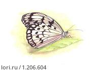 Нежная бабочка Нимфалида белая. Стоковая иллюстрация, иллюстратор Мария Веселова / Фотобанк Лори