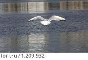 Купить «Чайка парит над водой», эксклюзивное фото № 1209932, снято 26 апреля 2009 г. (c) Яна Королёва / Фотобанк Лори