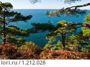 Купить «Осенний пейзаж, сосны на фоне моря», фото № 1212028, снято 8 ноября 2009 г. (c) Игорь Архипов / Фотобанк Лори