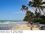 Берег экзотического острова с кокосовыми пальмами. Стоковое фото, фотограф Димитрий Сухов / Фотобанк Лори