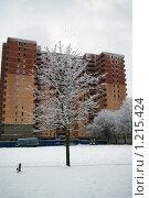 Купить «Замороженное дерево на фоне замороженной стройки», фото № 1215424, снято 13 ноября 2009 г. (c) Михаил Фёдоров / Фотобанк Лори