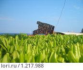 Ресторан в Италии (2007 год). Редакционное фото, фотограф Екатерина Петрухина / Фотобанк Лори