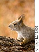 Купить «Белка на дереве», фото № 1218008, снято 4 ноября 2009 г. (c) Андрей Соловьев / Фотобанк Лори