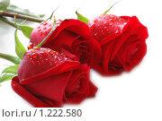 Купить «Красные розы», фото № 1222580, снято 8 марта 2007 г. (c) Elnur / Фотобанк Лори