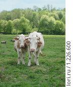 Купить «Дочки-матери», фото № 1226600, снято 11 мая 2008 г. (c) Анастасия Некрасова / Фотобанк Лори