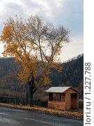 Одинокая беседка на осенней дороге в Горном Алтае. Стоковое фото, фотограф Елена Гришина / Фотобанк Лори