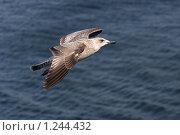 Купить «Полет по прямой», фото № 1244432, снято 12 августа 2009 г. (c) Маргарита Герм / Фотобанк Лори