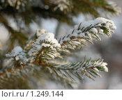 Снежная елка в солнечных лучах. Стоковое фото, фотограф Екатерина Будник / Фотобанк Лори