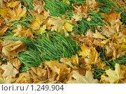 Купить «Желтые листья на зеленой траве», фото № 1249904, снято 28 октября 2007 г. (c) Михаил Малышев / Фотобанк Лори