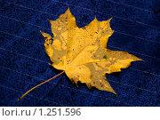 Капли дождя и осенний лист на стекле автомобиля. Стоковое фото, фотограф Михаил Пименов / Фотобанк Лори