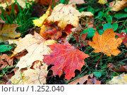 Купить «Листья», фото № 1252040, снято 9 октября 2008 г. (c) Мария Виноградова / Фотобанк Лори